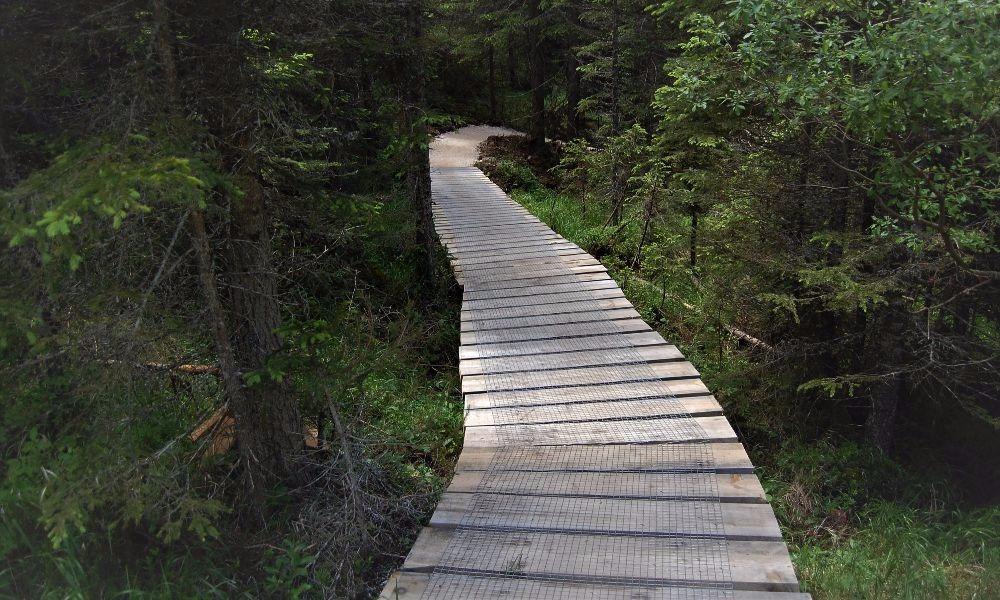 Carezza Trail